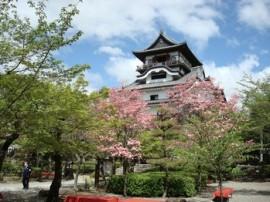 国宝犬山城とハナミヅキの花