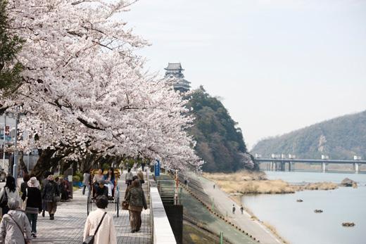 ohanami-jinrikisha1.jpg