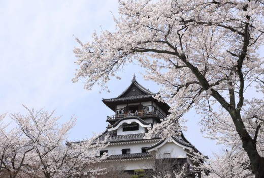https://inuyama.gr.jp/wordpress/wp-content/uploads/2016/03/4a8c5aa4d90df399788658524ce5f327-520x350.jpg
